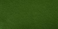 Fern Green WWF079